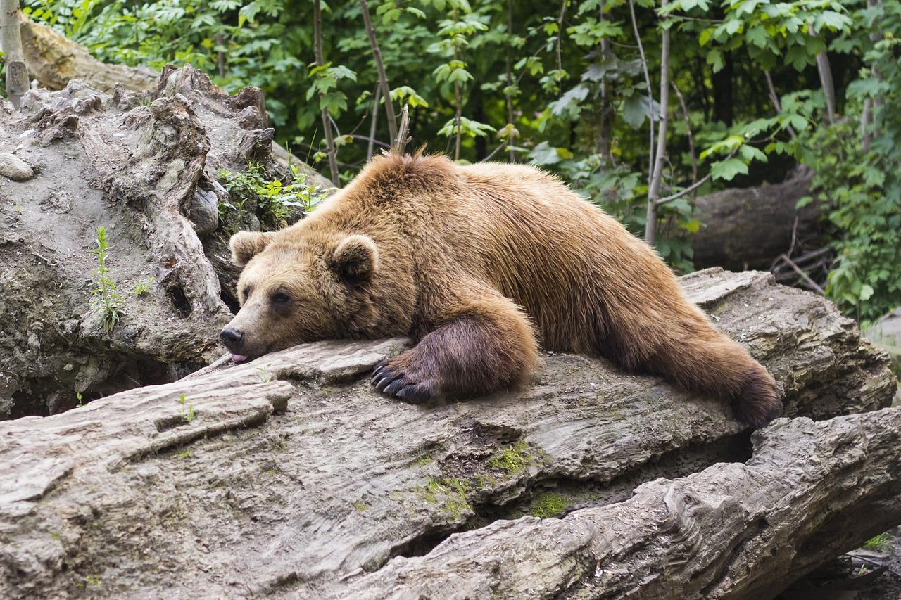 bear 1383980 1280