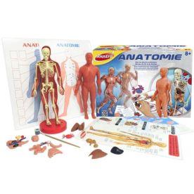heller-joustra-anatomie