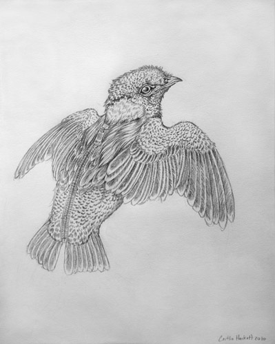 """Pencil on paper 9"""" x 12"""" in 15.25"""" x 17.75"""" frame $225.00"""