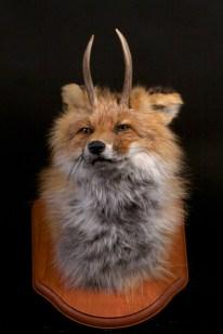 Katie Innamorato - Antlered Fox