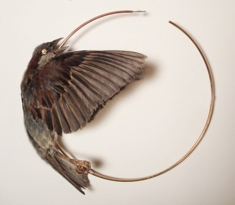 Naturally deceased English sparrow, Swarovski crystals, plated metal, metal wire, excelsior, twine, and epoxy 6 x 6 x 3 in. $270.00 (can be customized in gold or silver upon request)