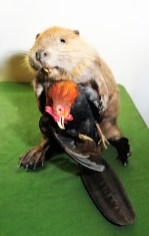 Traditional taxidermy mixed media, 18 x 12 x 14 in. $1,200.00