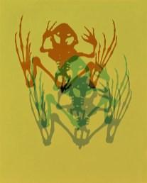 Doug Fogelson - Frog