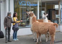 Besuch-bei-Vivo02