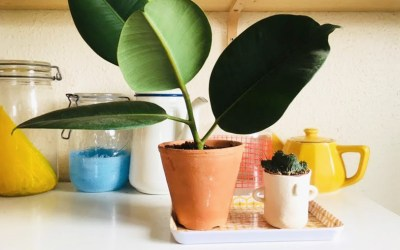 DIY plante : faire une bouture