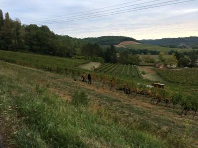 Vineyards of Domaine du Théronron