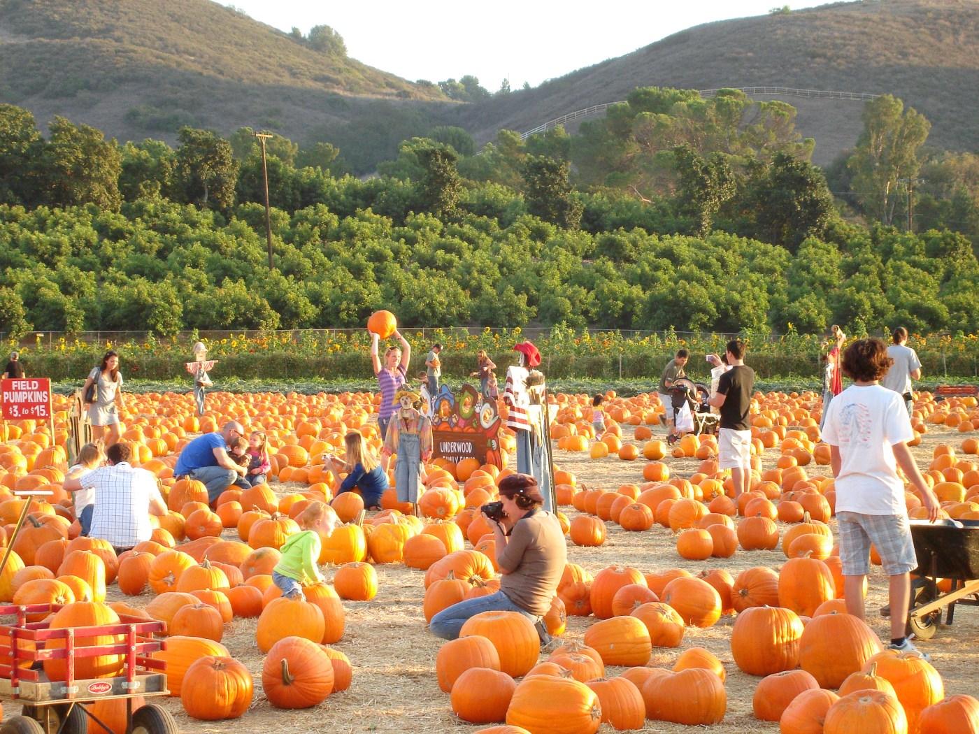 pumpkin-patch-2
