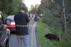 Fotografía de Deby Dixon Photography en el Parque Nacional de Yellowstone