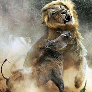 Imagen obtenida en http://ink361.com/