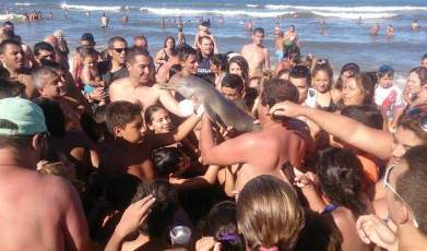 cria de delfin