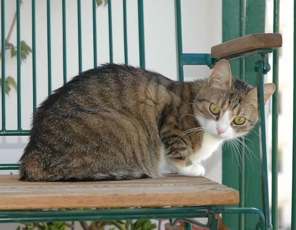 Podemos Villarrobledo solicita que se incluya en los presupuestos una ayuda de 200€ a las familias con gatos