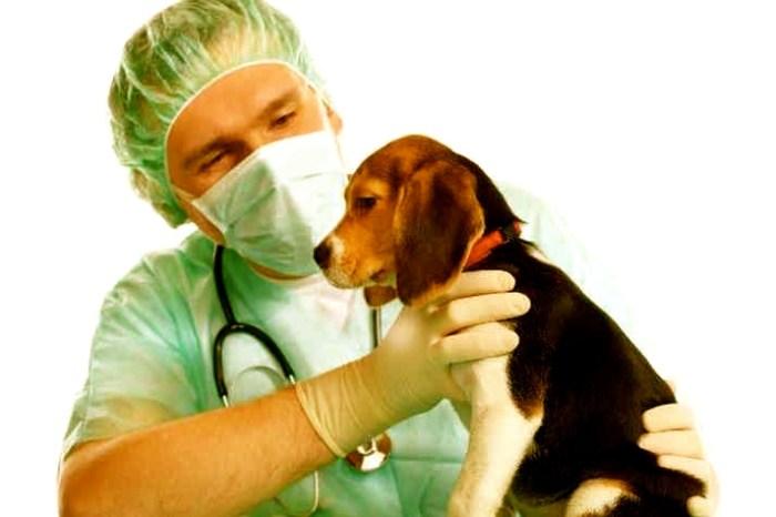 Un perro es ingresado en el centro veterinario de Villarrobledo después de morder a un señor de El Provencio
