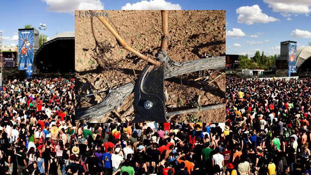 El Ayuntamiento de Villarrobledo inicia la contratación de podadores para podar Viña-Rock