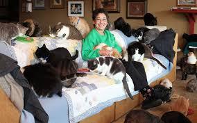Una animalista denuncia a una loca de los gatos de Las Pedroñeras por no dar de comer a los animales durante la cuarentena