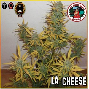 la-cheese