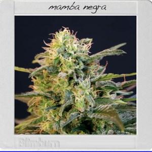 mamba-negra_2