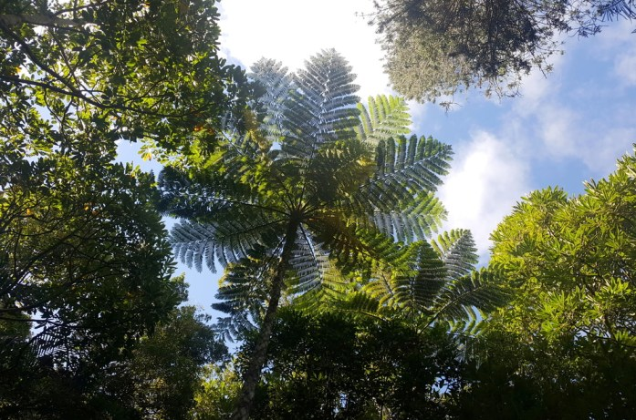 Nouvelle Calédonie - parc des grandes fougères