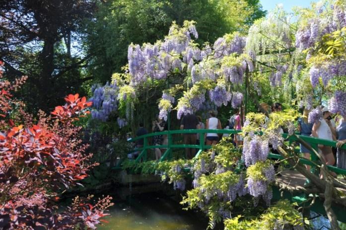 Jardin de Monet à Giverny - pont couvert de glycines
