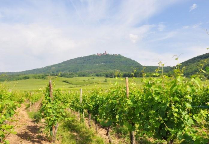 Vue sur le Haut Koenigsbourg en Alsace depuis la vallée