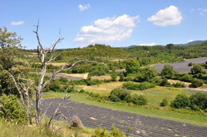 Photographier la lavande en Provence - Buoux