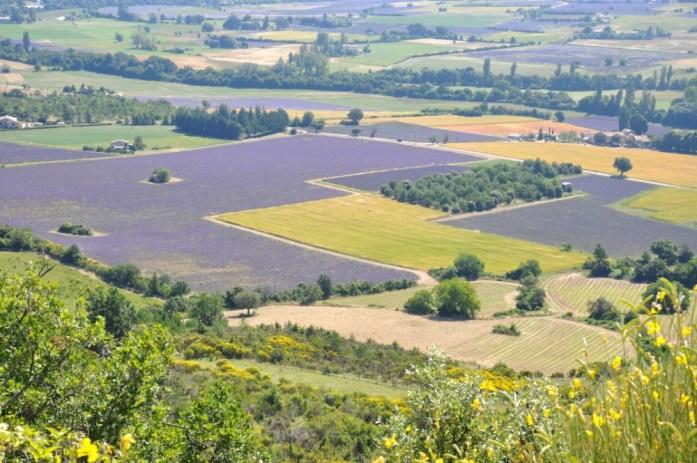 Photographier la lavande en Provence - champs vus d'en haut