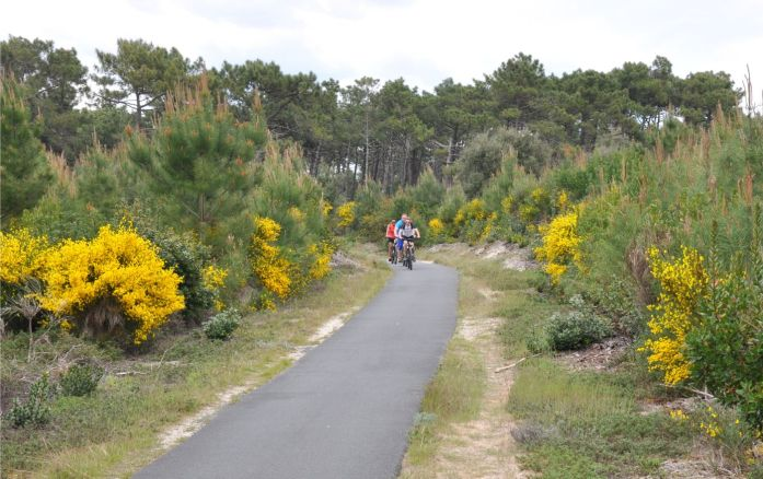 Visiter le Cap Ferret à vélo - les pistes cyclables