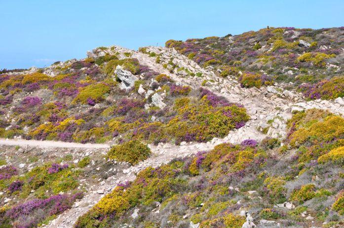 Balade au Cap d'Erquy