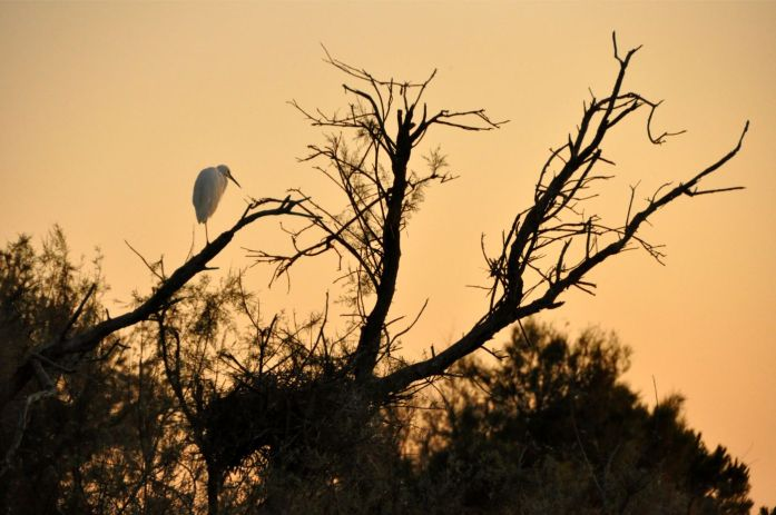Camargue : parc ornithologique du pont de gau