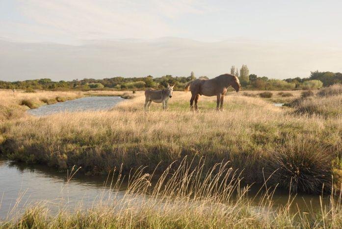 Île d'Oléron : les marais