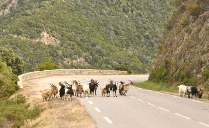 Routes corses - Blog La Marinière en Voyage