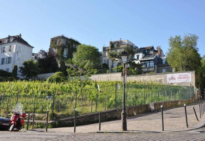 Vignes de Montmartre - Blog La Marinière en Voyage