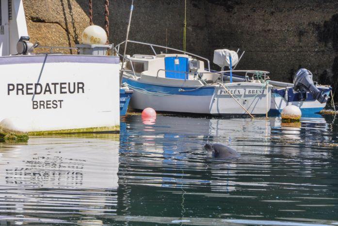 Port d'Ouessant - Blog La Marinière en voyage