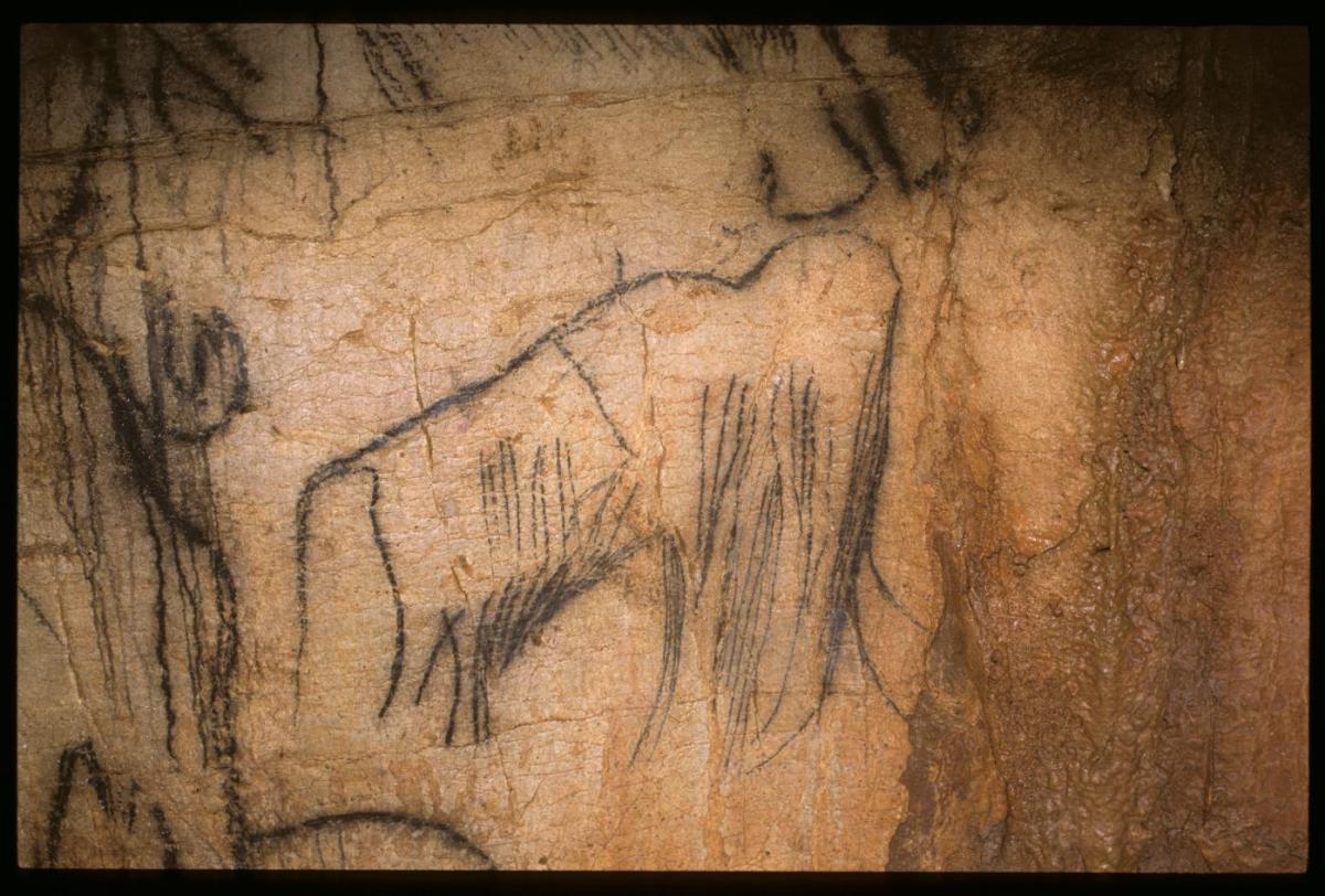 Mammouth, extrait de la Frise Noire. Grotte du Pech Merle