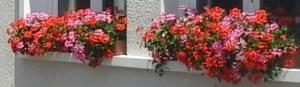 fleurs jardinieres