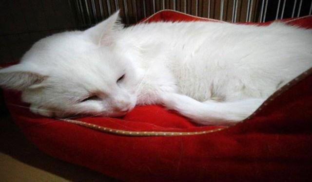 Retrato ajeno: El gato de Alfonsina