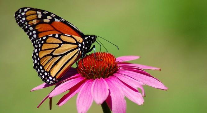 Of Butterflies and Mini-vans