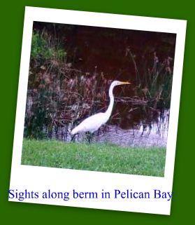 bird-along-berm