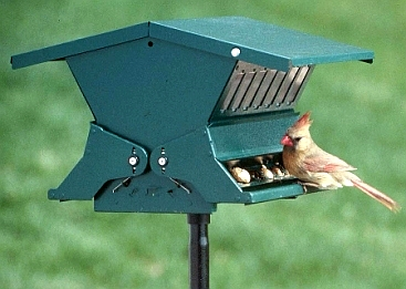Hopper feeder with latched top is easy to fill with seed.