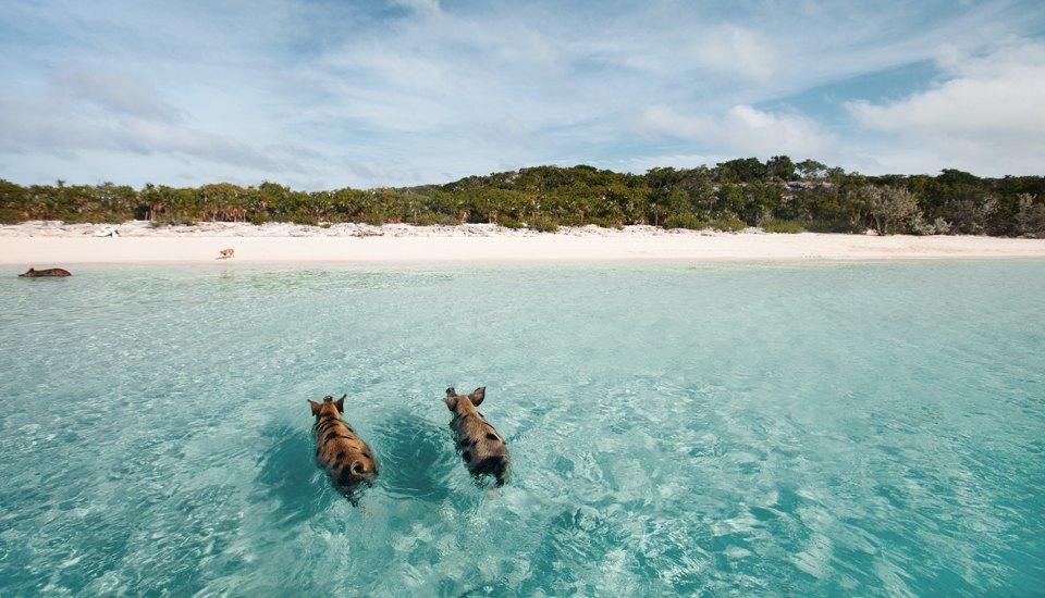 Идеи для путешествий: необычные пляжи и один тропический коктейль . Изображение № 8.