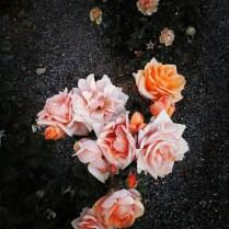 """""""Rosas Decembrinas"""""""