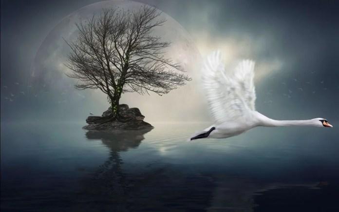 Cigno-che-vola-sul-lago