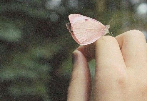 mariposa-sobre-una-mano