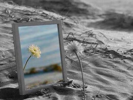 flor ante espejo