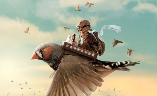 Niño sobre un pájaro
