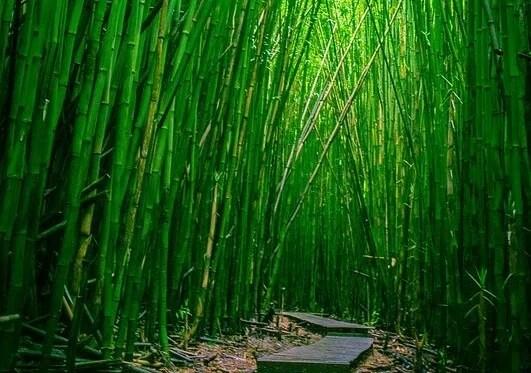 camino de el helecho y el bambú