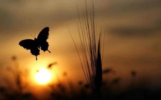 mariposa al amanecer simbolizando la búsqueda de la abundancia