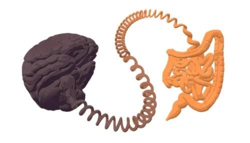 Intestino y cerebro conectados