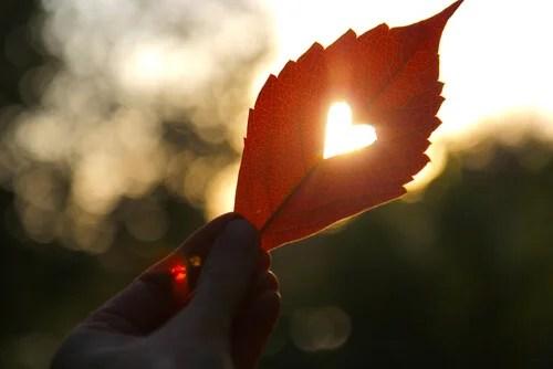 Hoja con forma de corazón simbolizando que te toca ser feliz