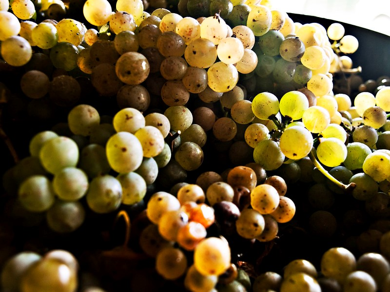 mesa-habla-uvas-rias-baixas-albarino