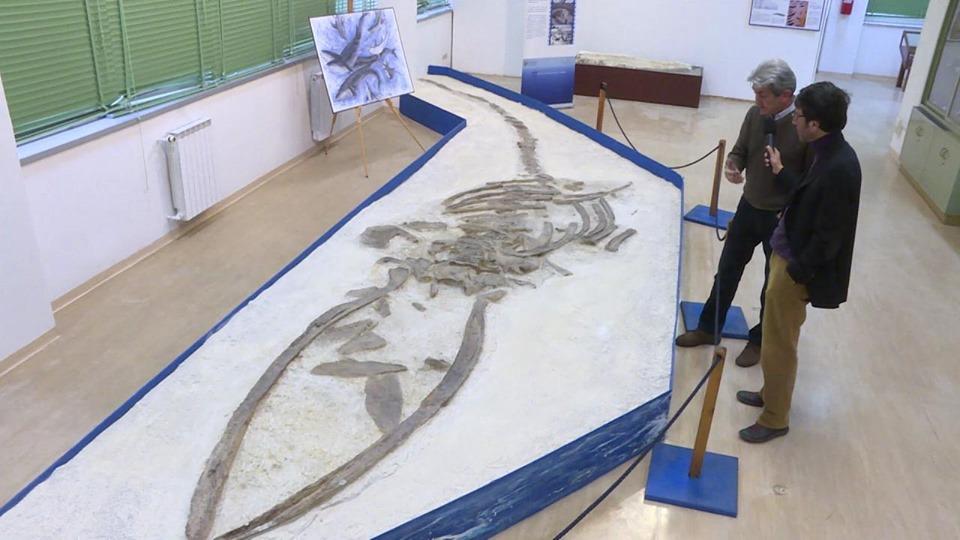 Tesori del Mare nascosti in Puglia: Annalisa il fossile di balenottera